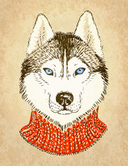 Husky Dog. Vector illustration, eps10.