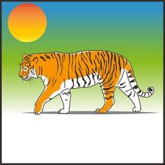 Тигр. Tiger.