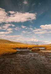 Mountain river swamp with tussocks and grass in sunlight at sunset