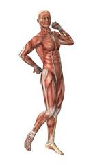 Male Figure Muscle Maps