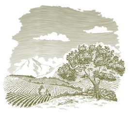 Pen and ink drawing of a farm field with mountains in the background.