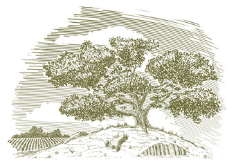 Pen and ink drawing of a tree on a hill with a field in the background.