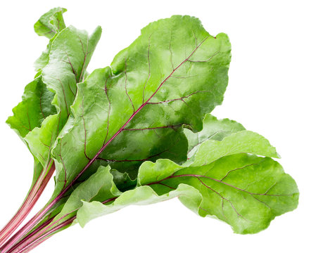 beet leaves isolated on the white background