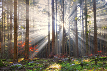 Magical sun rays in forest landscape. Lovely autumn colors in dreamy forest.