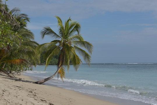 Der Nationalpark Cahuita an der Karibikküste von Costa Rica