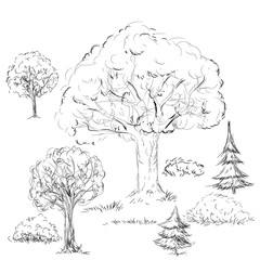 Tree and bushes in sketch. Doodle drawing tree collection in vec