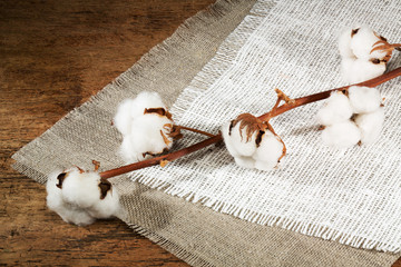 branches of cotton, fiber on a wooden background