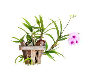Orchid Potted isolated on white background