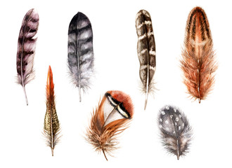Hand Drawn Watercolor Feathers.