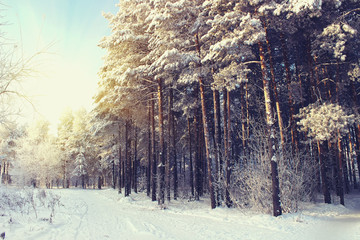 Winter wonderland. Retro style filter.
