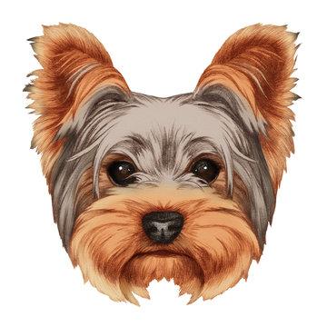 Portrait of Yorkshire Terrier Dog. Hand-drawn illustration, digitally colored.