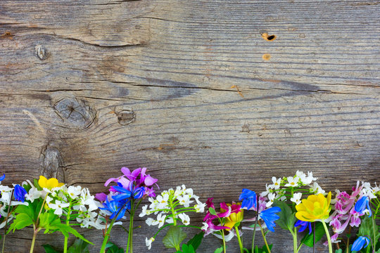 Wild colorful spring flowers on an old cracked wooden barn board. Copy space