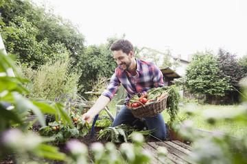 Man gardening in vegetable patch