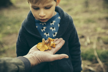 Little boy looking at chanterelle mushrooms in man's hand