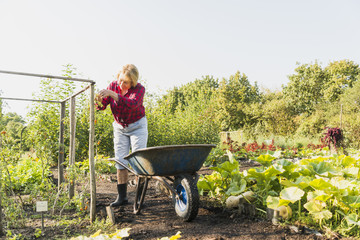 Senior woman gardening in vegetable patch
