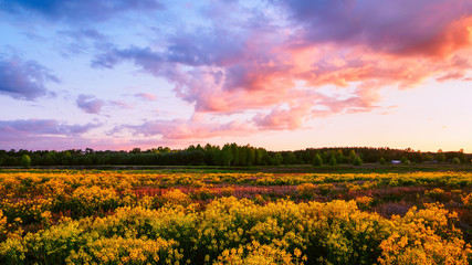 Beautiful Evening Sky Above A Flower Field - Spring Landscape