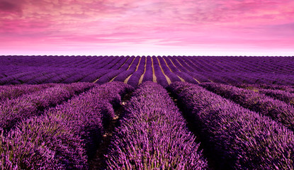 Wall Murals Candy pink Lavender field Summer sunset landscape