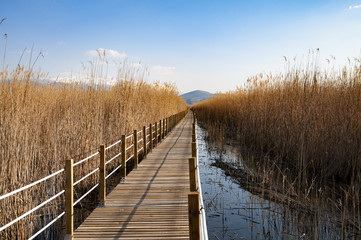 reeds, bridge and lake