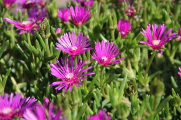 Flowers in Bulgaria, year 2014
