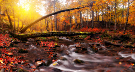 Creek at autumn forest