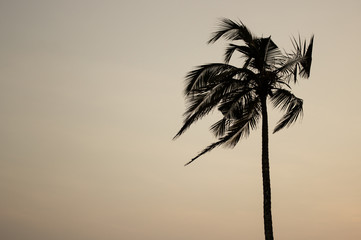 Single palm tree at warm background