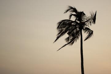 Single palm tree at warm background