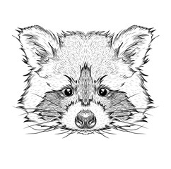 Hand draw raccoon portrait. Hand draw vector illustration
