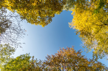 yellow and green trees with blue sky