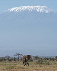 Kenya Africa Amboseli reserve  Mt Kilimanjaro and Elephant