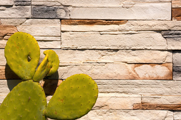 Green Cactus on white Wall Stones / Detail of old cactus on a white and brown stone wall