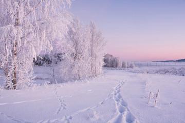 White landscape of frosty winter morning . Frozen birches on snowy field