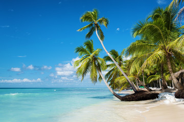Canvas Prints Tropical beach Caribbean beach in Saona island, Dominican Republic