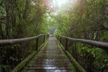 Wooden bridge in tropical rain forest.
