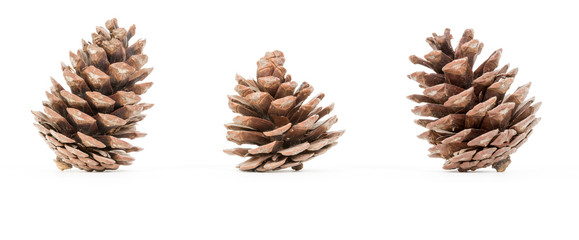 Group of pincones