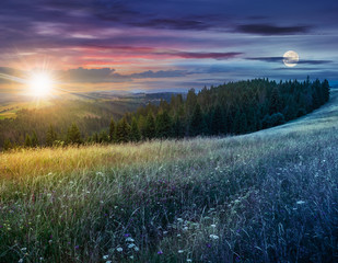 day and night composite image of large meadow with herbs,  trees in mountain area