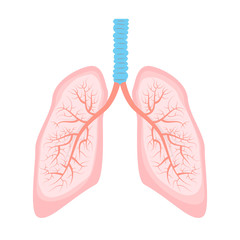 human lung illustration.