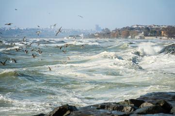 Seagulls over Sea of Marmara on a windy day