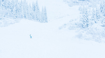 scenic view of small people walking in snow mountain,Washington,