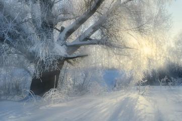 Winter picturesque  landscape