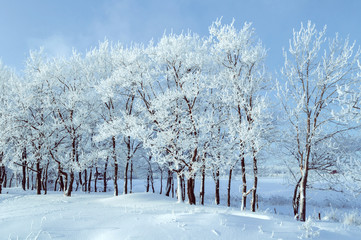 Winter landscape in cold weather