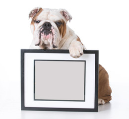 dog holding picture