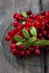 cowberries and red currants in a glass plate, vertical