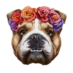 Portrait of English Bulldog with floral head wreath. Hand-drawn illustration, digitally colored.