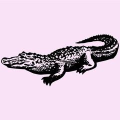 crocodile, alligator, doodle style, sketch illustration