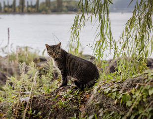 a mixed breeds cat sitting on the rock by the lake