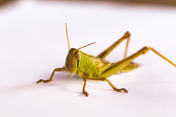 the grasshopper on paper background