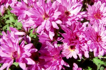 Beautiful flowers, close up
