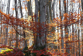 forest with colorful deciduous tree leaves