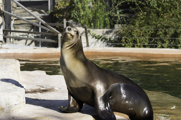 Sunbathing Sea Lion