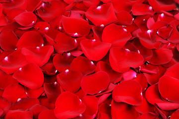 Fototapete - red rose petal background